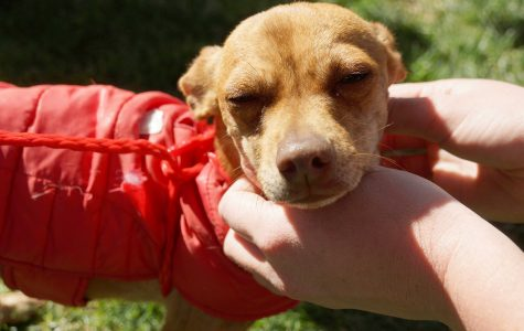 UTEP hosts 'Miner Paws' in attempt to destress students