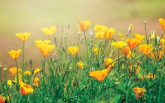 Poppies festival returns this weekend