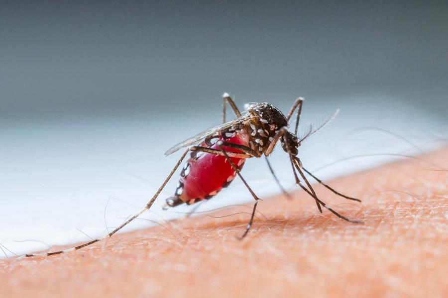 Mosquitoes+pose+health+risk%2C+experts+provide+advice