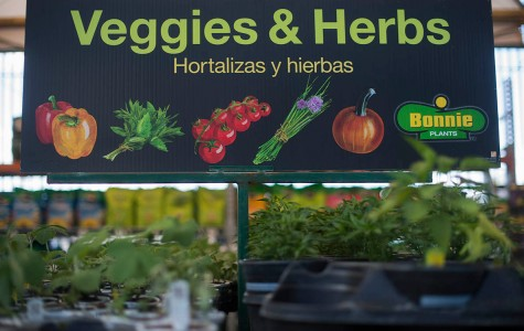 Local markets celebrate Earth Day with homegrown crops