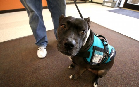 Nellie the service dog helps junior multimedia journalism student Jason Green cope with PTSD.