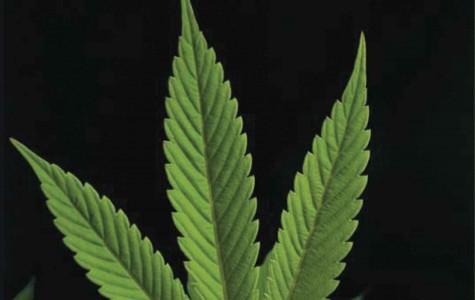 "Journalist Ana Lourdes Cardenas wrote ""Marihuana: El Viaje a la Legalización"" to inform readers about the process of legalizing marijuana."