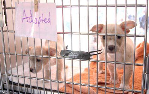 Humane Society of El Paso hosts adopting event