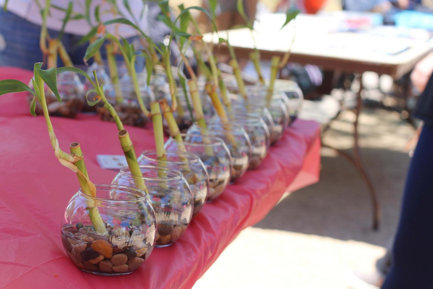 Plant+sale+at+the+celebration+of+UTEP%27s%C2%A0+Student+Government+Association+%28SGA%29+100+years+of+service+at+Centennial+Plaza.