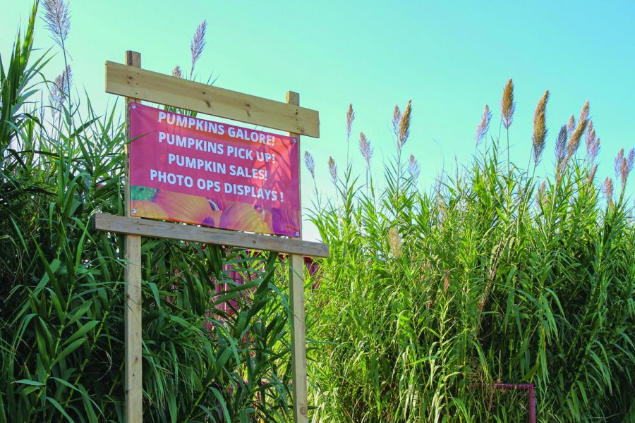 Although the coronavirus pandemic has put a halt to many activities throughout the year, La Union Maze and Mesilla Valley Maze will be up and running this season with some restrictions.