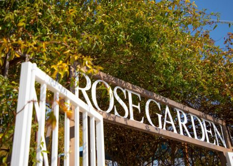 The Rose Garden in El Paso has opened up. Many volunteers have been working hard to help prepare the roses for this Spring.